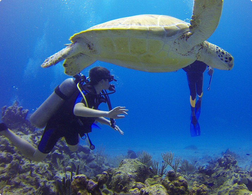 Diving Tours and Courses