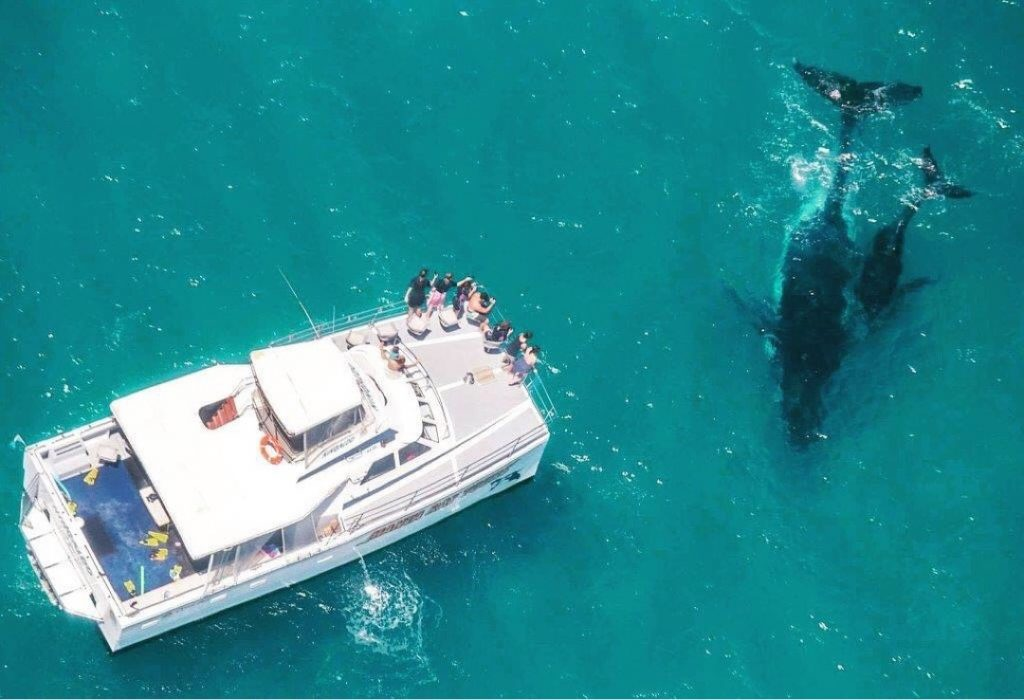 Swim with Humpbacks on the Ningaloo now open for public comment