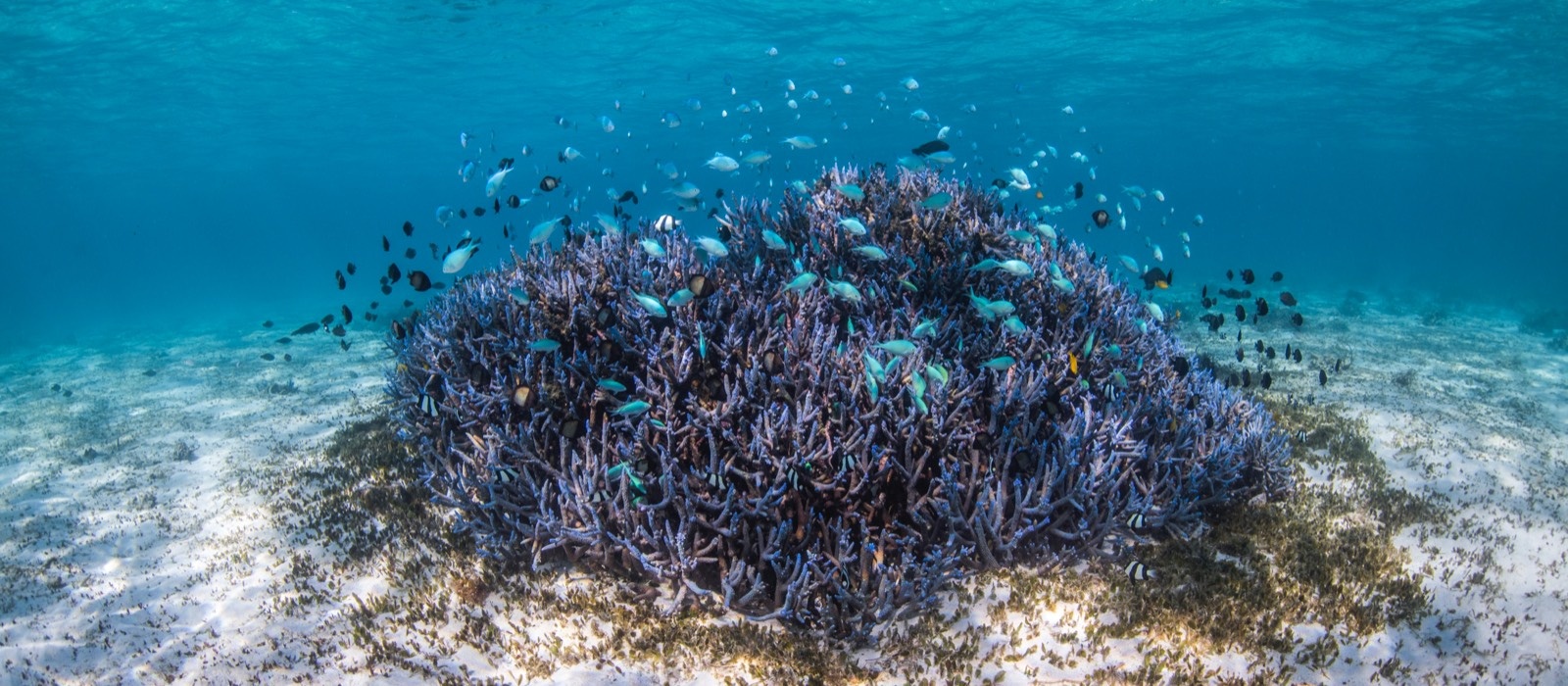 Ningaloo Coral Bay Gallery