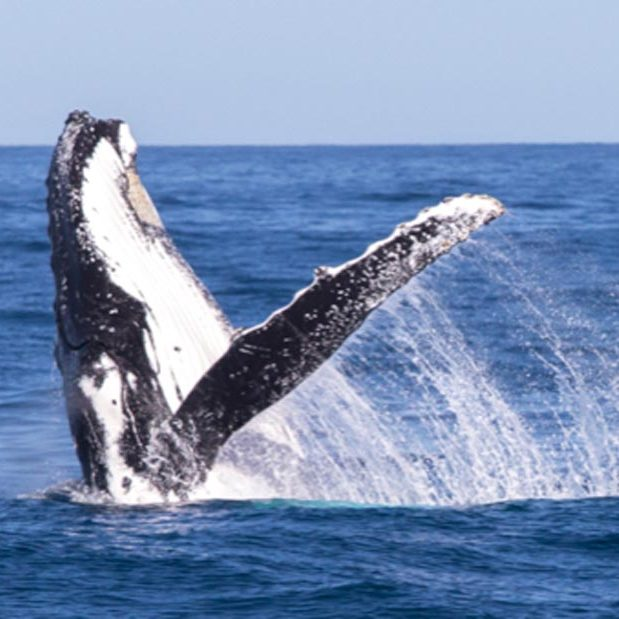 whale-watching-tours-preview-img